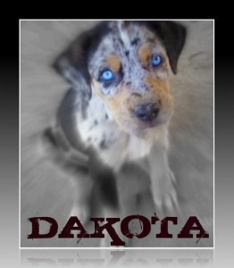 Dakota Connecticut